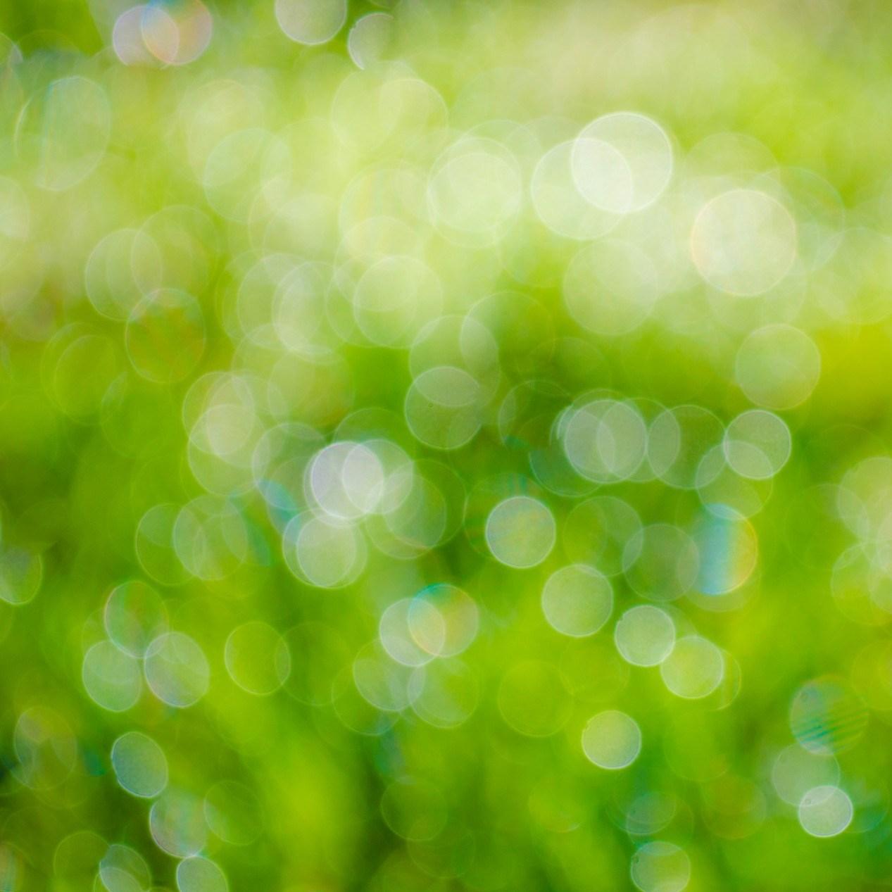 vert-été-soleil